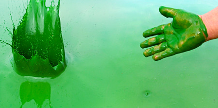 Human hand polluted by green liquid. Water pollution by blooming blue-green algae (Cyanobacteria) is a world environmental problem.
