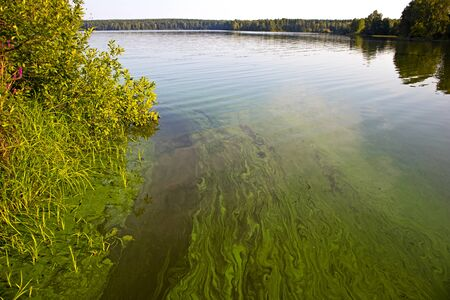 Water landscape with blue-green algae surface. Natural view of lake, swamp or river with blooming Cyanobacteria. It is world environmental problem and ecology concept of polluted nature. Stok Fotoğraf