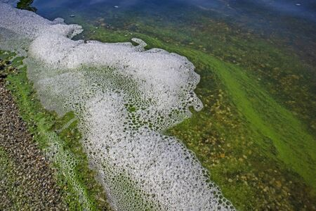 Foam and water with blooming blue-green algae (Cyanobacteria). Coastline of rivers and lakes with harmful algal blooms. It is world environmental problem. Ecology concept of polluted nature.