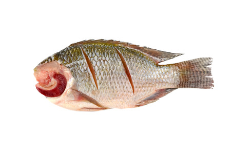 white nile: Nile Tilapia on a white background Stock Photo