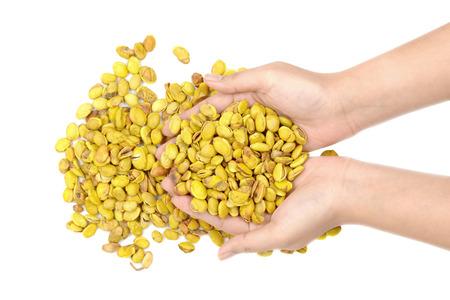 Lablab purpureus bean