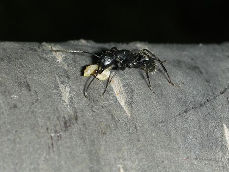 tree works: an ant Stock Photo