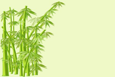 japanese culture: green bamboo nature background Japanese culture Stock Photo