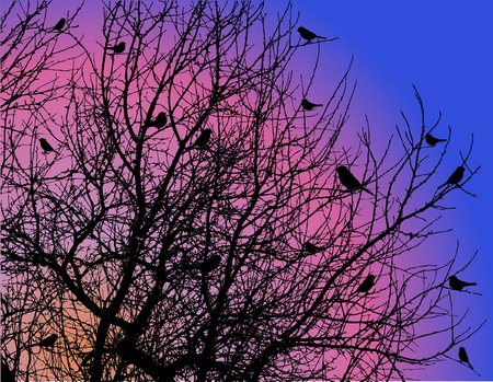 tree branches: birds on tree branches on dawn sky Illustration