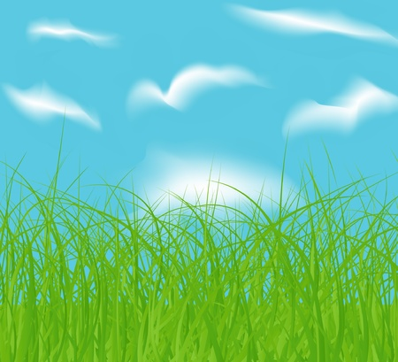 vector spring green field and blue cloud sky Vector