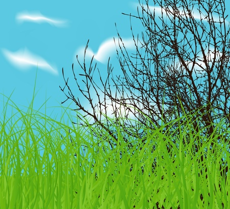 vector tree at spring green field and blue cloud sky Vector