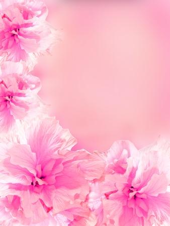 flower decoratively stylized abstraction illustration illustration