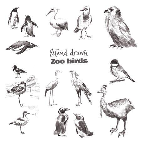 Handgezeichnete Skizze Vögel. Schwarz-Weiß-Set von Zoovögeln. Pinguin Magellan, Pinguin Subantarktis, Reiher, Vogel Sekretär, Pied Avoced, Cazuar, Meise, Krähe, Adler, Pelikan