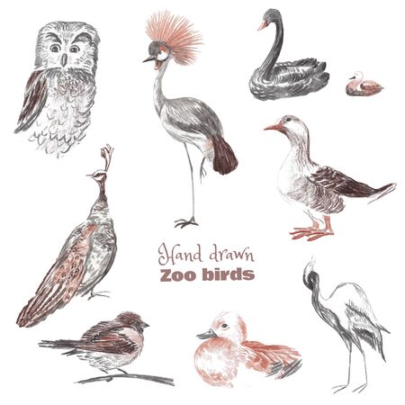 Hand-drawn sketch of birds of a zoo. Drawn with sauce and sanguine crowned crane, owl, black swan, goose, peacock, sparrow, duck, heron.