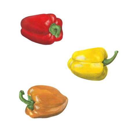 Red, orange, yellow pepper isolated on white background for design and decoration.Set of bright watercolor vegetables.