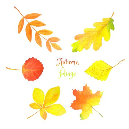 Abstract watercolor illustration with autumn foliage for decorative design. Autumn set: colorful leaves isolated on white. Botanical seasonal print. Maple, oak, rowan, birch, aspen, chestnut leaf.