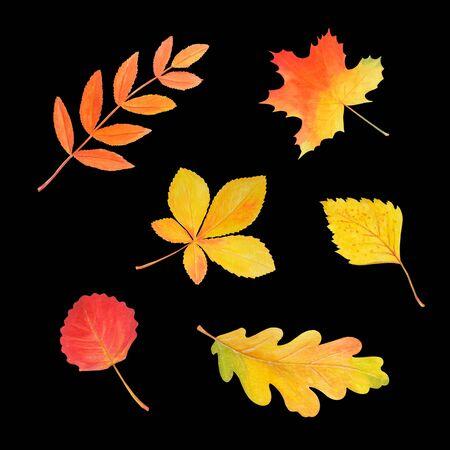 Colorful autumn foliage in beautiful style isolated on black background. Botanical illustration. Autumn watercolor set. Maple leaf, oak leaf, rowan leaf, birch leaf, aspen leaf, chestnut leaf. 写真素材