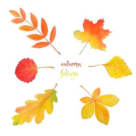 Abstract watercolor illustration with autumn foliage for decorative design. Autumn set: colorful leaves isolated on white. Botanical seasonal print. Maple leaf, oak leaf, rowan leaf, birch leaf, aspen