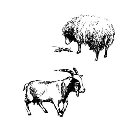 Vector illustration. Goat and sheep. Black and white sketch set of domestic animals.Vector illustration. Goat and sheep. Black and white sketch set of domestic animals. 向量圖像
