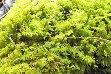 Green lichen moss growing on a tree Stok Fotoğraf