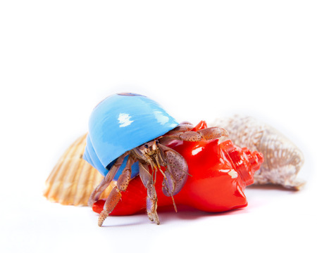 A Friendly Hermit Crab Crawls Over Colorful Shells Isolated on White