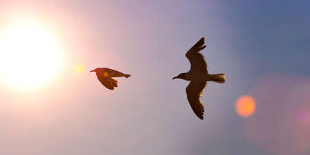 Two great black-backed gulls are silhouetted against vibrant sunset sky with lens flare