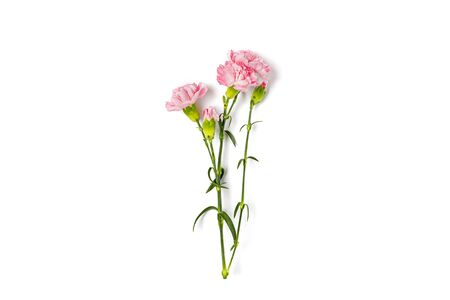 bouquet of pink carnation flower isolated on white background Top view Flat lay Holiday card 8 March, Happy Valentines day, Mothers, Memorial, Teachers day concept Copy space.