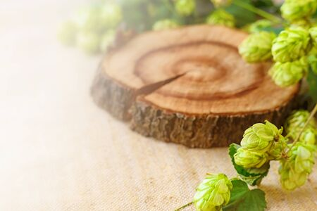 A sprig of hops with green leaves on a Board of cut wood . Place for text Archivio Fotografico - 132079839