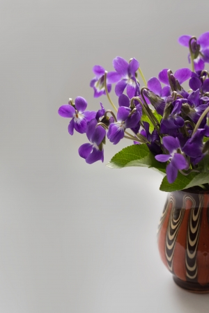 Beautiful bouquet of field violets in a vase photo