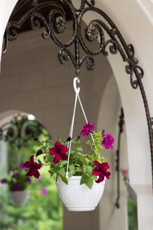 Beautiful flower pot framing house entrance photo
