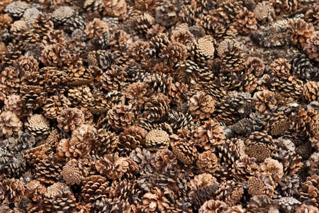 Many dry pine cones of different sizes cover the entire surface, forming a beautiful background