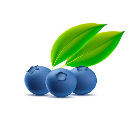 Blueberry with leaves isolated on white background, three berries 3d graphic