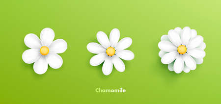 Camomile setwhite daisy flowers icon illustration with different petals, realistic floral clipart