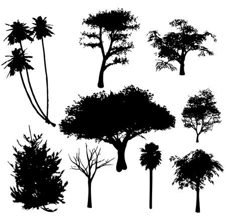 plats: vector trees silhouettes Illustration