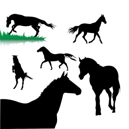 bridle: horses silhouettes Illustration