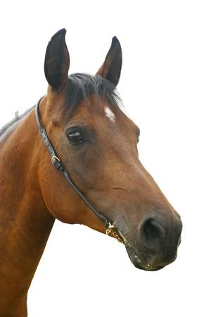 horse isolated photo