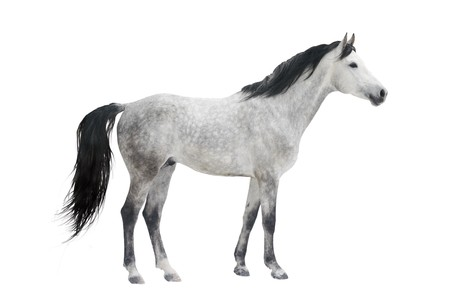 horse isolated Stock Photo - 4428140