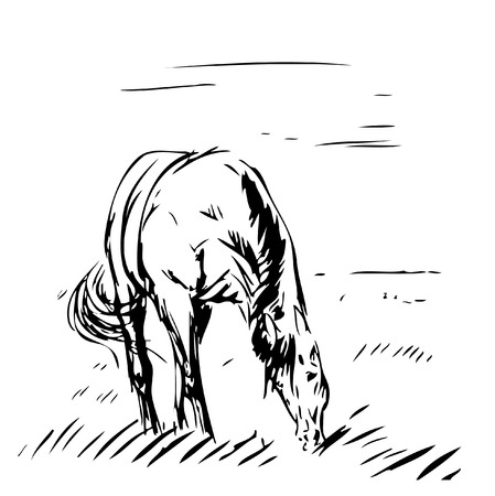 farm land: horse grazing on a pasture. sketch