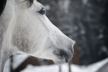 horse closeup photo