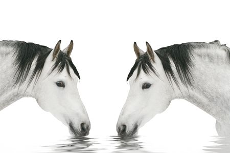 two horses drinking Stock Photo