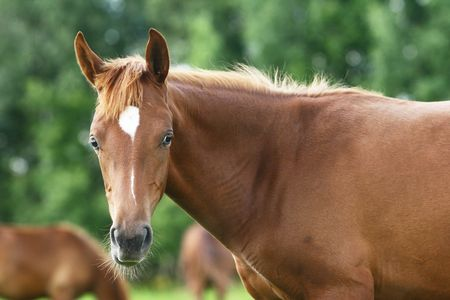 young arabian colt in herd Stock Photo - 5381692