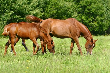 mare and foal grazing in field photo