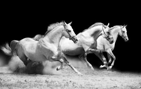 strong light: three stallions on black galloping in dust Stock Photo