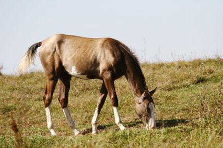 filly: grey filly on field