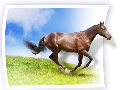 galloping horse on card photo