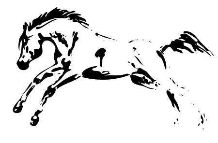 arabian horse: horse jumping