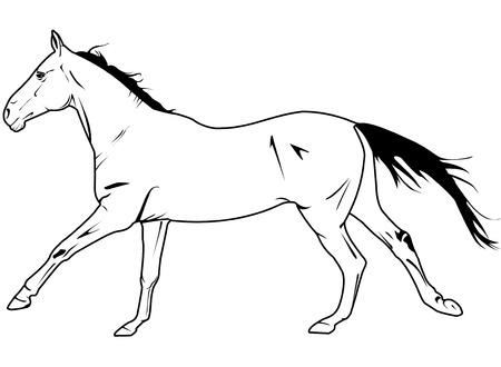 galop: vecteur de galop du cheval  Illustration