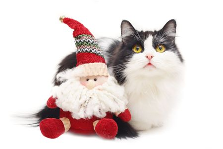 cat and toy santa isolated on white photo