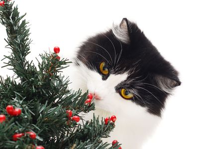 cat and christmas tree photo