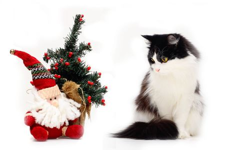 cat and christmas staf on white Stock Photo - 5825681