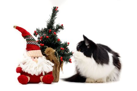 cat and christmas stuff Stock Photo - 5825680