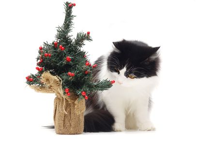 cat and christmas stuff photo