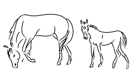 foal and mare vector isolated on a white