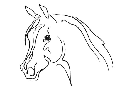 horse head vector sketch isolated on a white Stock Vector - 5825685