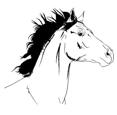 arab horse sketch